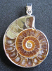 Ammonite - Pendant